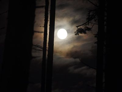 The full moon is a wonderfully eerie sight through the trees.