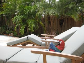 Fort Lauderdale house photo - yes...we know the parrot thing is corny.