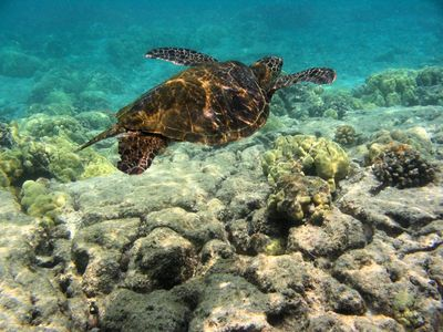 Kailua Kona condo rental - Kona offers the best snorkeling in Hawaii