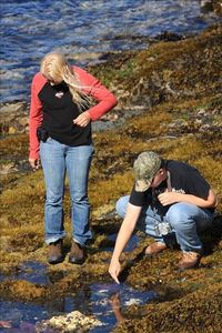 Guests from Tennesse looking at starfish in a tide pool.