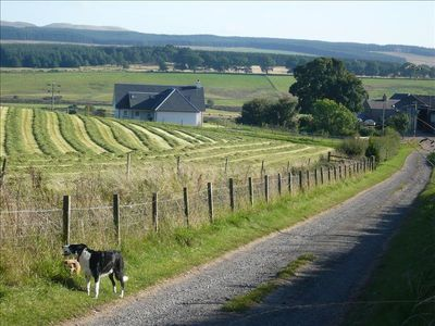 Looking down the farm road to Cambushinnie Croft  on a summers day with our dogs