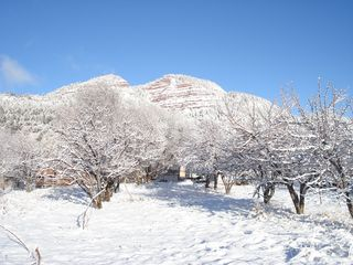Durango house photo - The orchard in the winter.