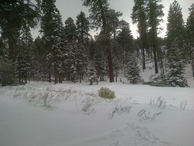 Our Backyard is the National Forest