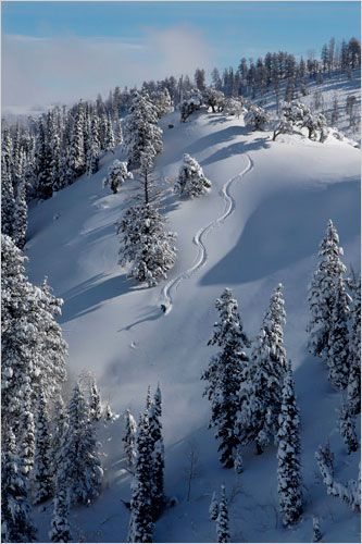 Skiing for all Levels. Powder Anyone?