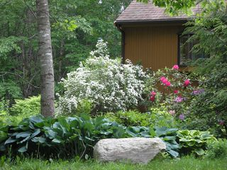 Wiscasset house photo - Roddies and spirea exploding in May