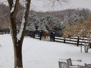 Horses in winter out in fields.
