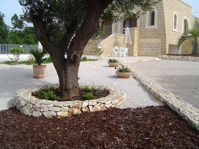 The olive tree border.