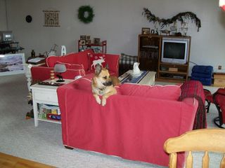 Lee cabin photo - The living area during the day. Family pets are always welcome! That's Dusty.