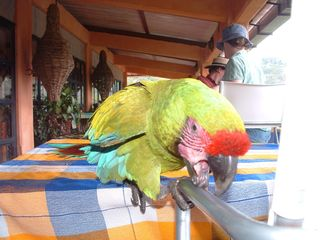 La Cruz de Huanacaxtle house photo - Visit the Botanical Gardens and meet the wild parrots.