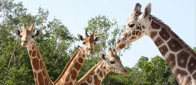 Take the family to the Naples Zoo and enjoy an interactive day with the animals.