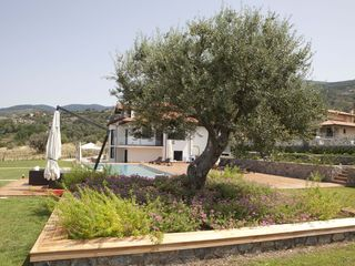 Fuscaldo villa photo - Century old olive tree shading the pool