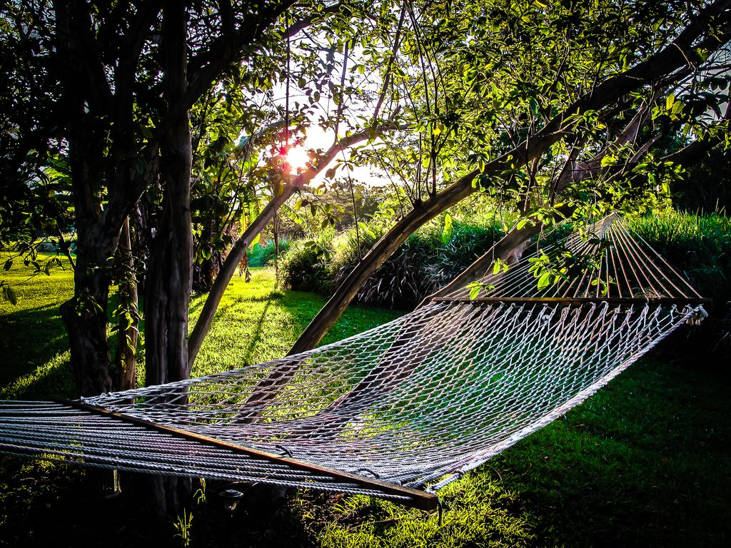 Hammock for two under the guava and avocado trees.
