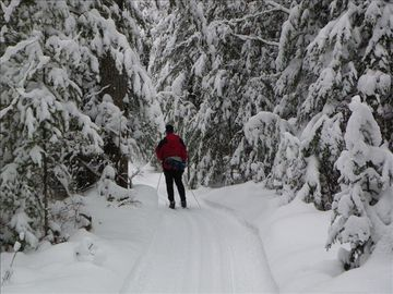 Cross-country skiing the Mason Tract trail.