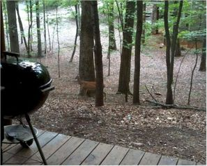 Big Canoe house photo - Grill dinner and watch for deer!