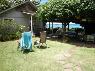 Haleiwa house photo - Hau Tree Arbor- shade for picnics with Main home shown