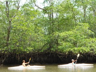 Drake Bay cottage photo - Kayak through miles of incredible mangrove channels
