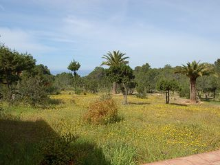 Sant Josep (San Jose) villa photo - Garden1.