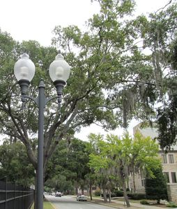 Enjoy the spanish moss-draped trees lining the streets.