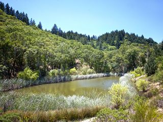 Healdsburg estate photo - Pond
