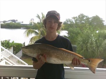 Great Redfish off the dock!