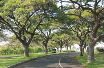 Scenic Drive through Waikoloa Resort to the villas