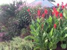 Wildwood Crest condo photo - Canna,butterfly bushes and assortment of native plants July 2012