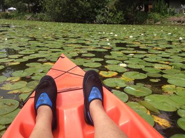 taking a quick kayak ride on Long Pond through the water lilies