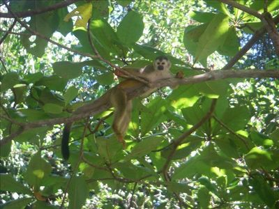 Even the Squirrel Monkeys need to relax now and then