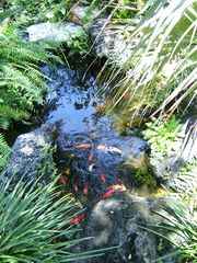 Winter Haven house photo - Koi pond