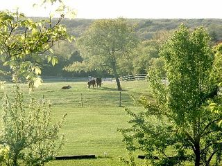 Chilmark house photo - Farmland next door.