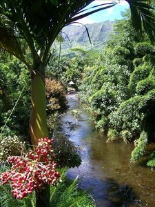 listen to jungle sounds from the lanai. ancient tiki hut along the riverbank