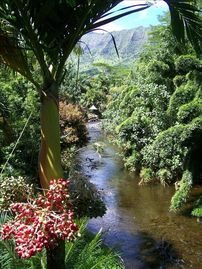Hanalei house rental - listen to jungle sounds from the lanai. ancient tiki hut along the riverbank