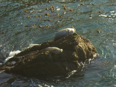 Two Seals Basking on Rock In Sunny Cove below Deck