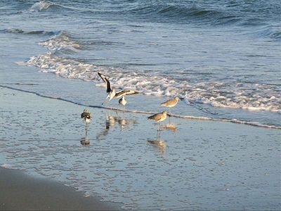 Sandpipers on Crescent Beach