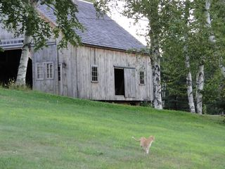 Ascutney farmhouse photo - Sheep barn and barn cat