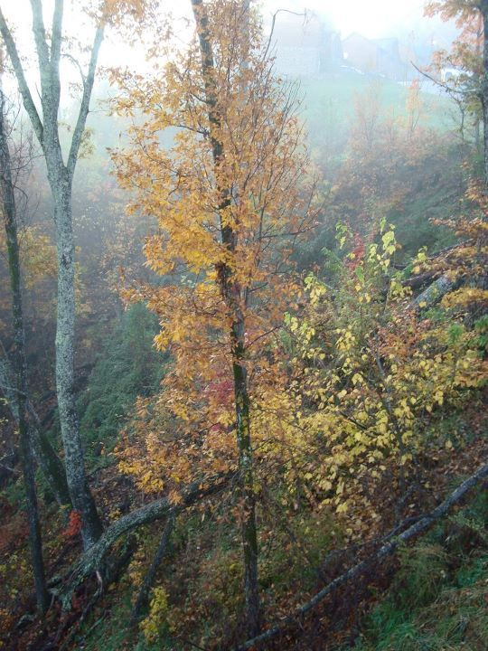 Surreal fall colors from deck - Nov 2011