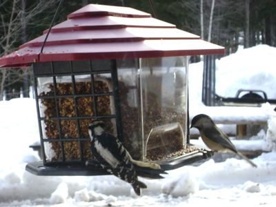 Enjoy seeing the pretty birds at our many feeders!