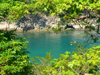 Manuel Antonio condo photo - Bisanz bay is great for snorkeling!