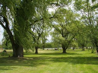 Coxsackie farmhouse photo - over an acre of lawn with beautiful old trees