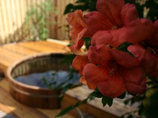 Santa Fe cottage photo - Trumpet Vine Blooming in August