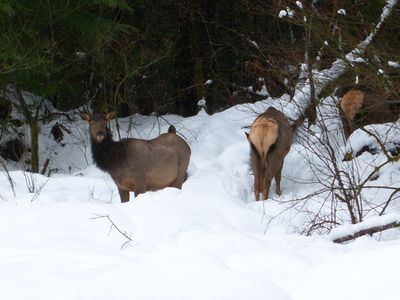 A herd of elk come by this cabin regularly.