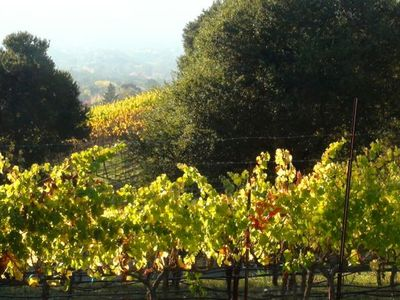 Sonoma cottage rental - A view of vineyards from Mountain Avenue
