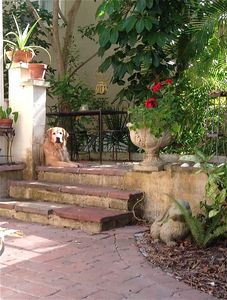 Steps to the side terrace.......and a visitor!