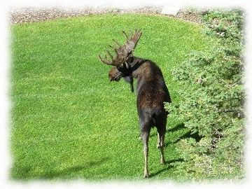 Come visit us in the summer. The moose do!