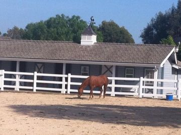 Orange house rental - Enjoy the country living Waking up to birds singing and horses neighing.