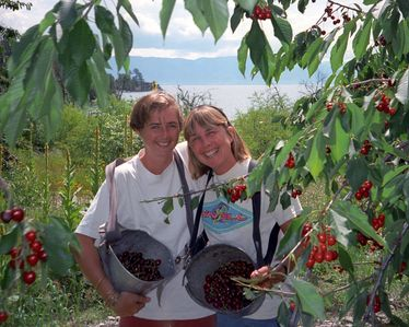 Picking the famous Flathead Lake cherries