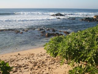 Haleiwa cottage photo - Beach in Winter months during surf season,