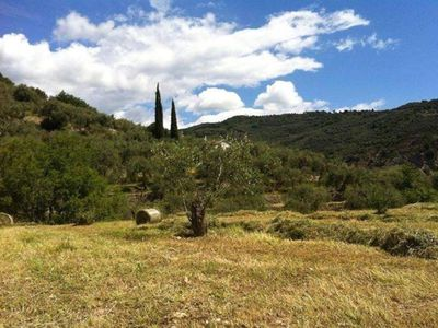 Simple relaxation in olive groves