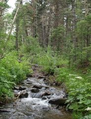 Creek in back of cabin - Westcliffe cabin vacation rental photo