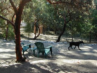 Idyllwild cabin photo - So many places to explore in the securely fenced yard